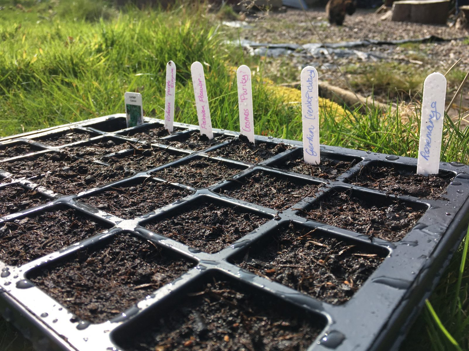 Seeds in propagation tray