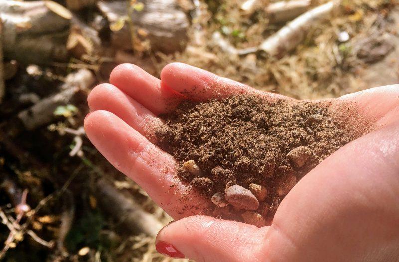 A handful of succulent soil
